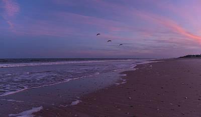 Pelican Photograph - Coastal Patrol by Betsy Knapp