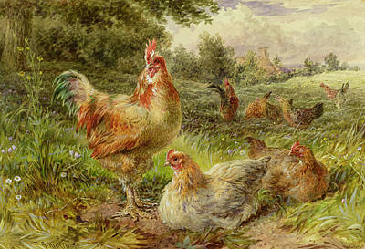 19th Century Painting - Cochin China Fowls by George Hickin