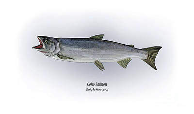 Salmon Drawing - Coho Salmon by Ralph Martens