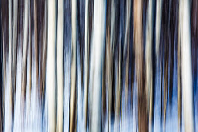 Abstract Movement Photograph - Cold Forest by Todd Klassy