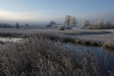 Winter Trees Photograph - Cold by Nina Pauli
