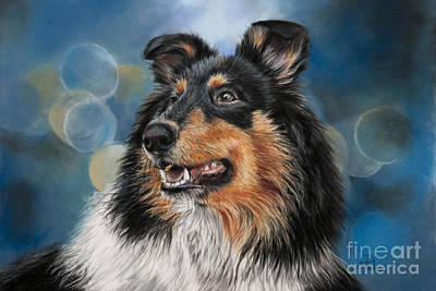 Collie Original by Sabrina  Pedron