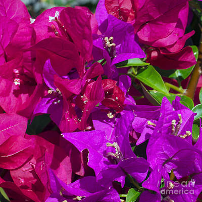 Caribbean Flowers Print featuring the photograph Color Me by Kurt Gustafson