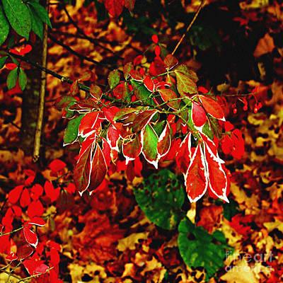 Burning Bush Digital Art - Autumn Foliage  by Carol F Austin