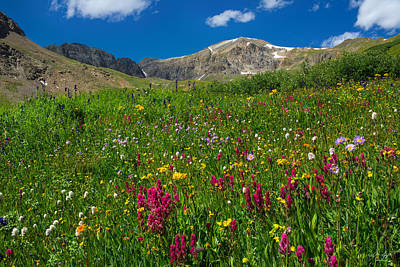 Flower Ers Photograph - Colorado 14er Handies Peak by Aaron Spong
