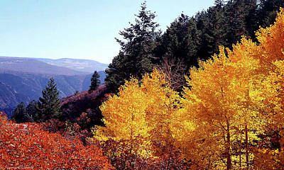 Photograph - Colorado Fall Colors by Tommy Anderson
