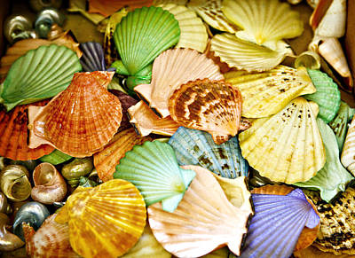 Colored Shells Print by Marilyn Hunt