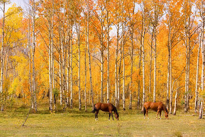 Colorful Autumn High Country Landscape Print by James BO  Insogna