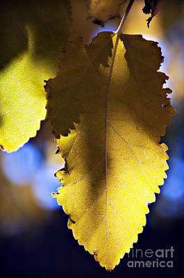 Colorful Autumn Leaf Print by Ray Laskowitz - Printscapes