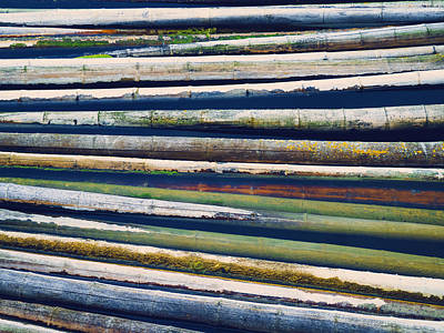 Hollow Photograph - Colorful Bamboo by Wim Lanclus