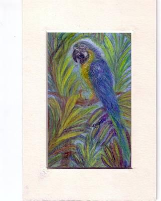 Macaw Drawing - Colorful Conversationalist by Regina Taormino
