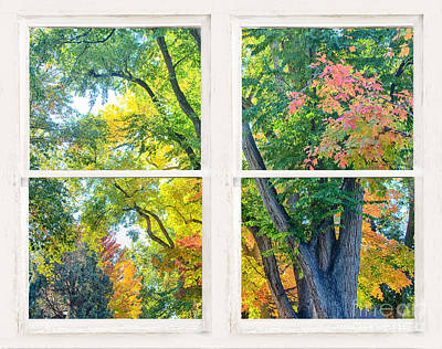 James Insogna Photograph - Colorful Forest Rustic Whitewashed Window View by James BO  Insogna