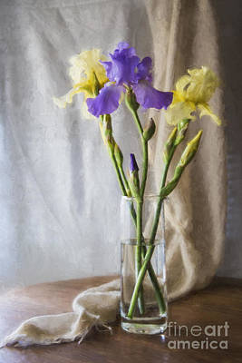 Colorful Irises Print by Elena Nosyreva