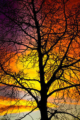 Trees Photograph - Colorful Silhouette by James BO  Insogna