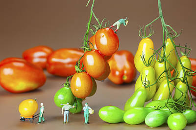 Colorful Tomato Harvest Little People On Food Print by Paul Ge