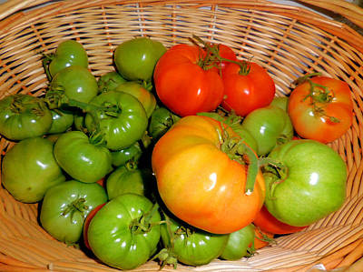 Colorful Tomatoes 3 Print by Lanjee Chee