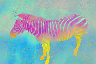 Zebra Digital Art - Colorful Zebra Art  by Ann Powell