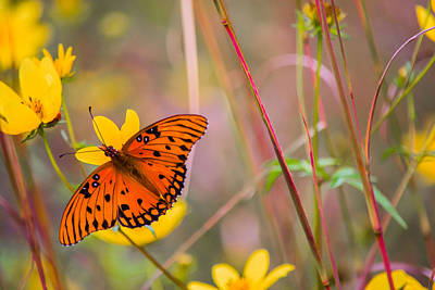 Butterfly In Flight Photograph - Colors Of Summer by Parker Cunningham