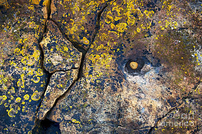 Abstract Creations Photograph - Colors Of The Coast by Tim Gainey