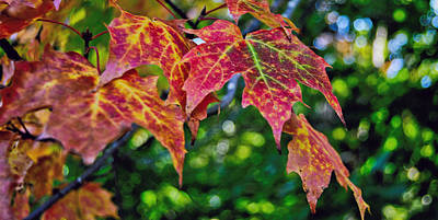 Autumn Photograph - Colors Of The Season by Kathleen Sartoris