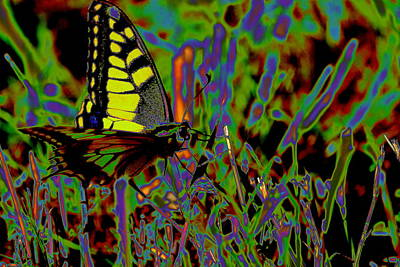 Field Photograph - Coloured Butterfly by Samantha Mattiello