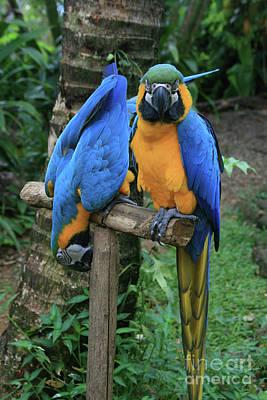 Colourful Macaw Pohakumoa Maui Hawaii Print by Sharon Mau