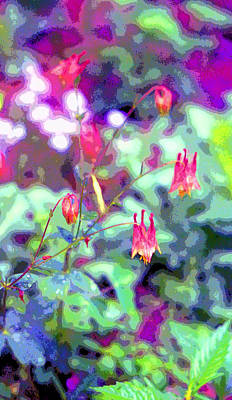 Columbine Aquilegia Canadensis Image Print by Paul Price