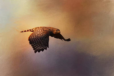 Red-shouldered Hawk Photograph - Coming In For The Evening by Jai Johnson