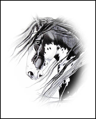 Pinto Drawing - Commanche by Cheryl Poland