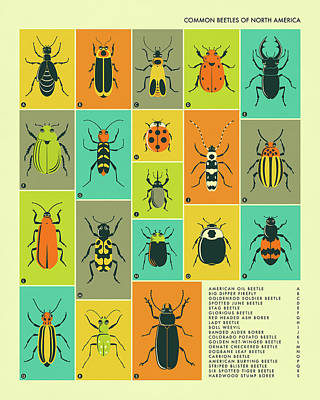 Beetle Digital Art - Common Beetles Of North America by Jazzberry Blue