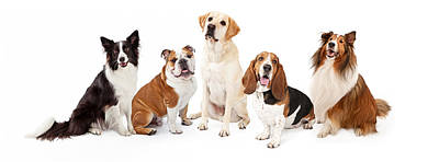 Common Family Dog Breeds Group Print by Susan  Schmitz