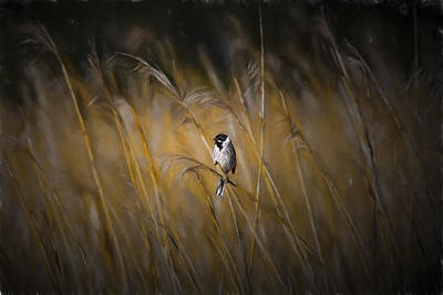 Bunting Digital Art - Common Reed Bunting Nov by Leif Sohlman