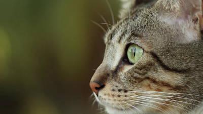 Images Of Cats Photograph - Concentration by Copyright Faraaz Abdool/Hector de Corazón