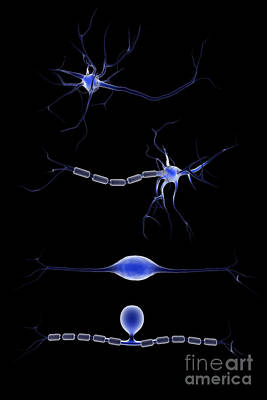 Conceptual Image Of A Neuron Print by Stocktrek Images