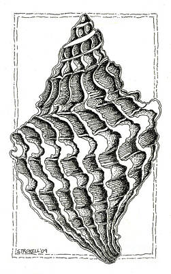 Dot Drawing - Conch Shell 2 by Stephanie Troxell
