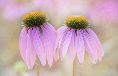 Coneflowers Photograph - Cone Flowers by Jeff Klingler