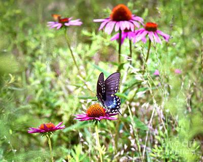 Butterfly Photograph - Coneflower Companion by Kerri Farley