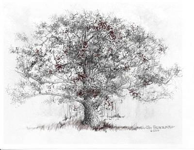 Connecticut - White Oak Print by Jim Hubbard