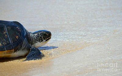 Hawaiian Honu Photograph - Contemplative Honu by Jackson Kowalski