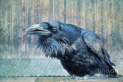 Blackbirds Photograph - Conversation  by Priska Wettstein