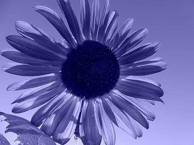 Fushia Photograph - Cool Blue by Tina M Wenger