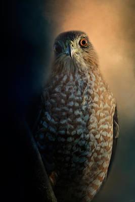 Hawk Photograph - Coopers Hawk At Sunset by Jai Johnson