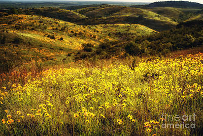 Photograph - Coreopsis In The Arbuckles by Tamyra Ayles