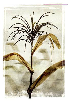 Tassel Digital Art - Corn Tassel Twilight by Michel Godts