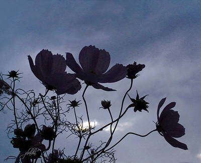 Photograph - Cosmos At Twilight by J R Baldini