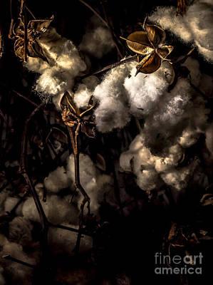 Cotton Bolls Print by James Aiken