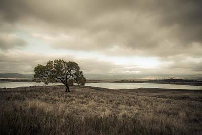 Rural Landscapes Photograph - Cottonwood In October by Alexander Kunz