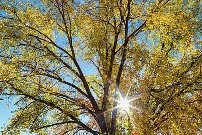Sun Photograph - Cottonwood Sunshine by James BO Insogna