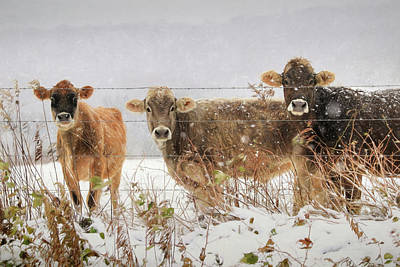 Photograph - Country Ladies by Lori Deiter