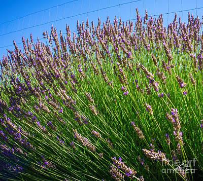 Rural Scenes Mixed Media - Country Lavender I  by Shari Warren